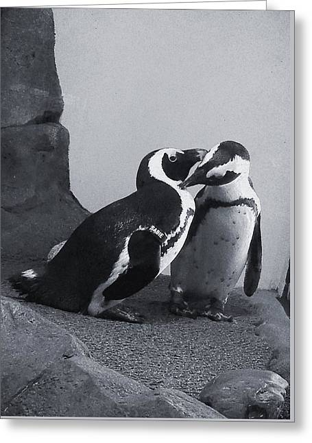Penguins Greeting Card by Sandy Taylor