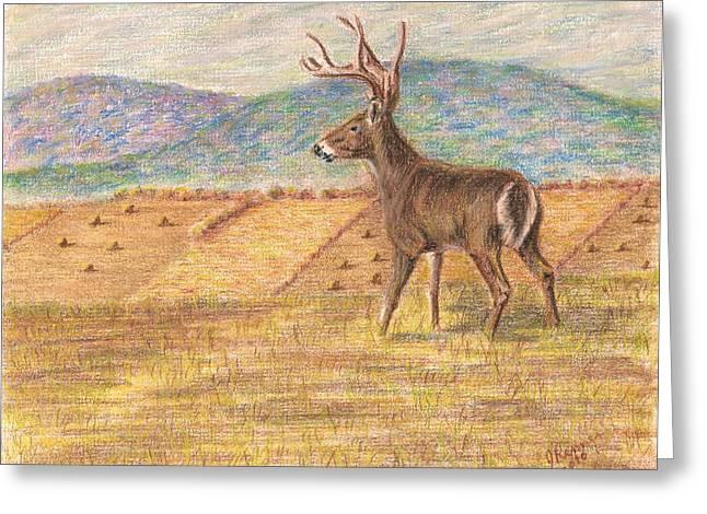 Pennsylvania Dawn Greeting Card by Joann Renner