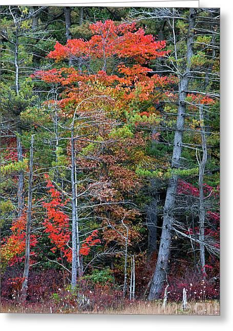 Pennsylvania Laurel Highlands Autumn Greeting Card by John Stephens