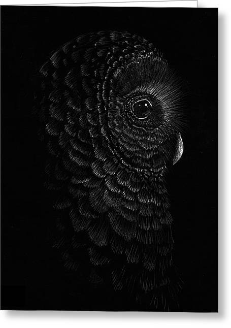 Pensive Owl Greeting Card by Sandy Balkow