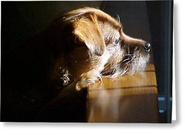 Pensive Puppy Greeting Card by Linda A Waterhouse