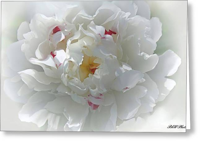 Peony Greeting Card by Bonnie Willis