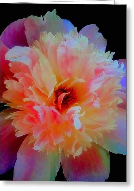 Peony Color Play Greeting Card