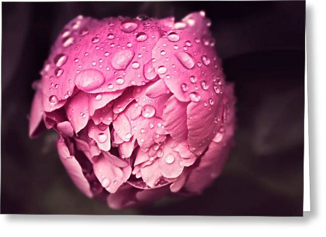Peony In The Rain Greeting Card