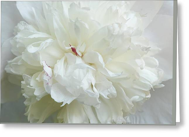 Peony In White Greeting Card