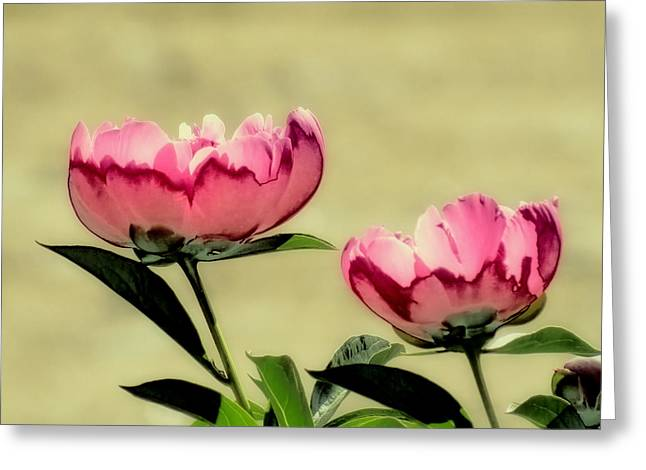 Peony Pair - Enhanced Greeting Card