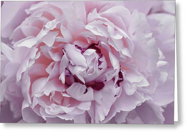 Peony Pom Poms Greeting Card by JAMART Photography