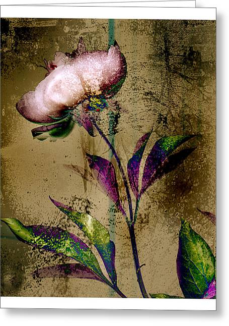 Peony Redux Greeting Card by Geoff Ault