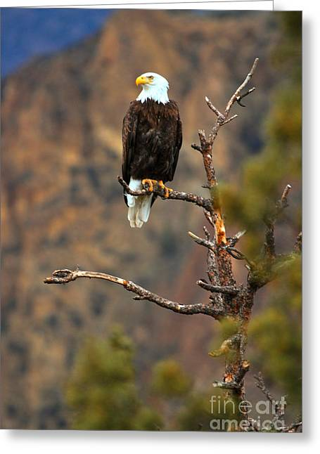 Perched At Smith Rock Greeting Card by Adam Jewell