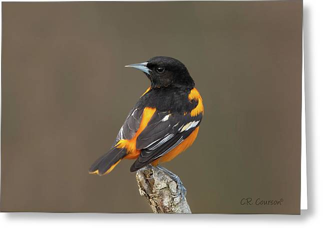Perched Baltimore Oriole Greeting Card