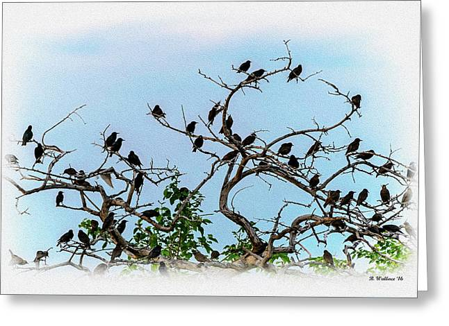 Perched Greeting Card by Brian Wallace