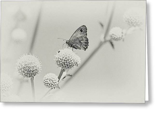 Perched Butterfly No. 255-2 Greeting Card