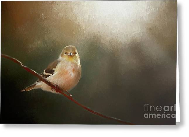 Greeting Card featuring the photograph Perched Goldfinch by Darren Fisher