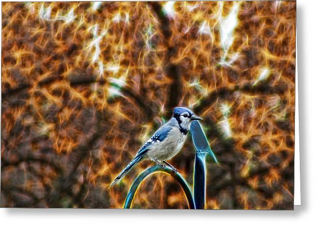 Perched Jay Greeting Card