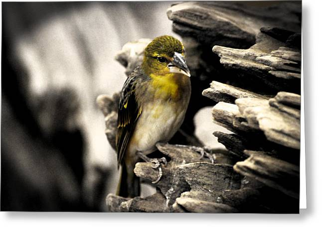 Perched Greeting Card by Martin Newman