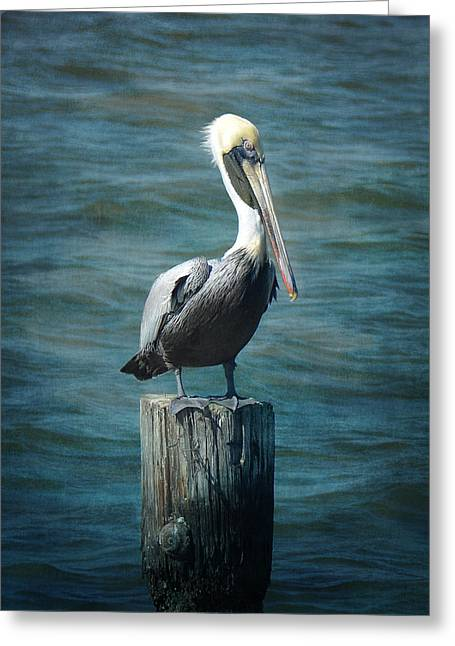 Perched Pelican Greeting Card by Carla Parris