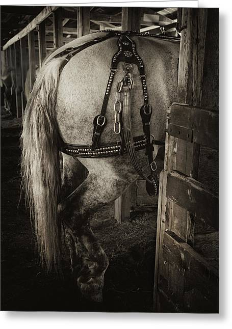 Percheron Draft Horse Greeting Card by Theresa Tahara