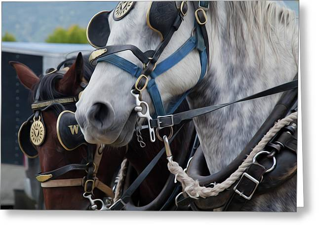 Percheron Horses Greeting Card by Theresa Tahara
