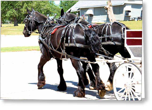Horse Pulling Wagon Greeting Cards - Percherons pulling Wagon Greeting Card by Cheryl Poland