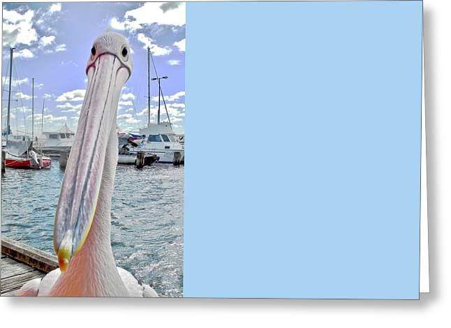 Percy The Pelican Greeting Card