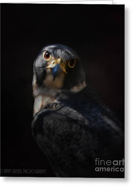 Peregrine Falcon Greeting Card by Kathy Russell