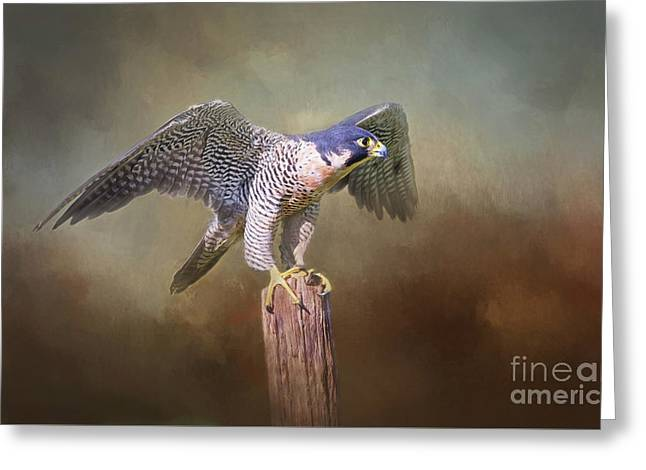 Peregrine Falcon Taking Flight Greeting Card