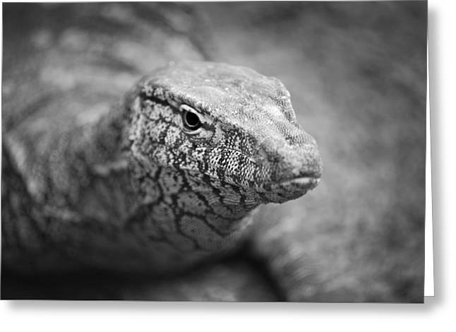 Perentie Close Up - Black And White Greeting Card