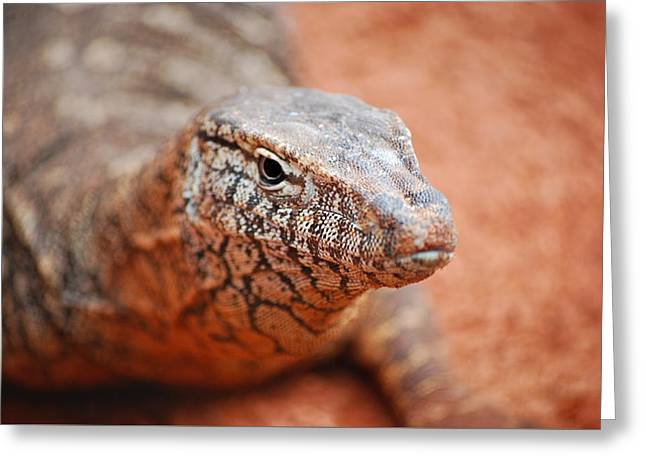 Perentie Close Up Greeting Card
