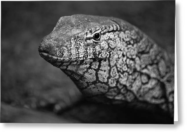 Perentie Monitor Lizard - Black And White Greeting Card