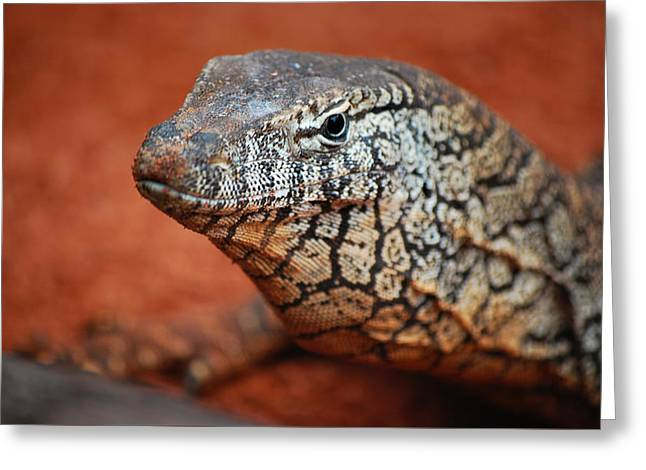 Perentie Monitor Lizard Color Greeting Card by Michelle Wrighton