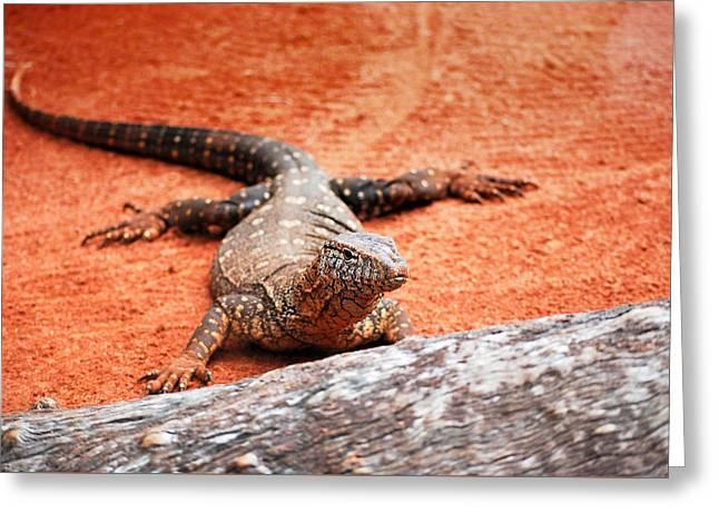Perentie Monitor Lizard Greeting Card