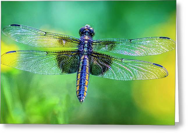 Perfect Dragonfly Greeting Card by Amarnath Mukta