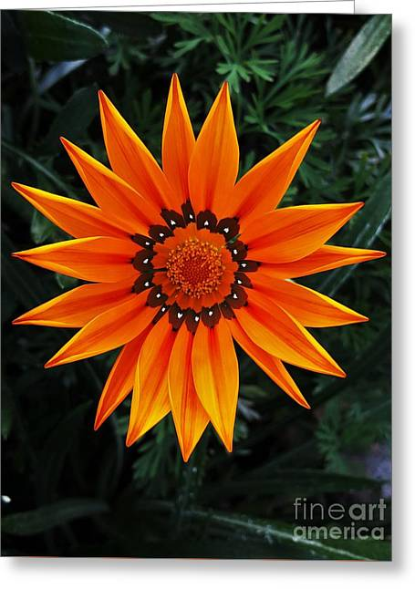 Perfect Flower  Greeting Card