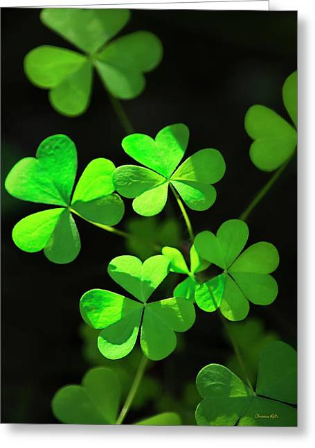 Perfect Green Shamrock Clovers Greeting Card