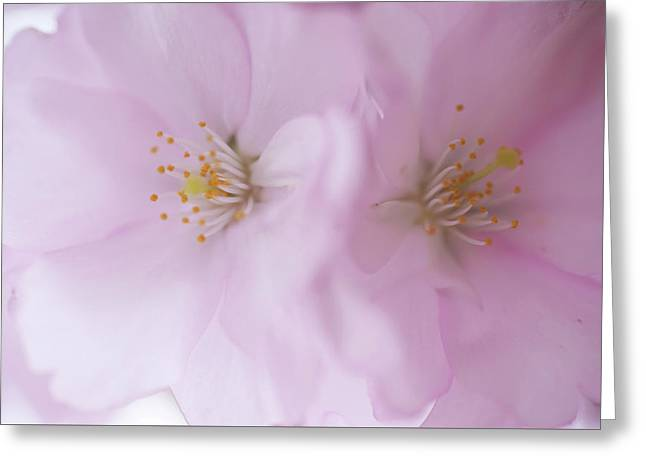 Perfect Pair. Spring Pastels Greeting Card by Jenny Rainbow