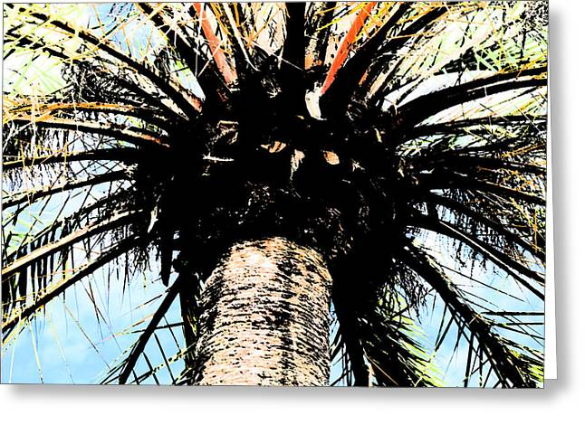 Perfect Palm Greeting Card by Nanette Hert