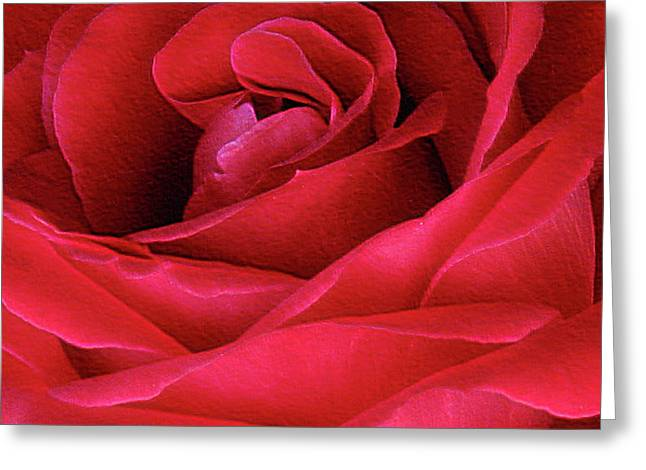 Greeting Card featuring the photograph Perfect Petals by Deborah Johnson