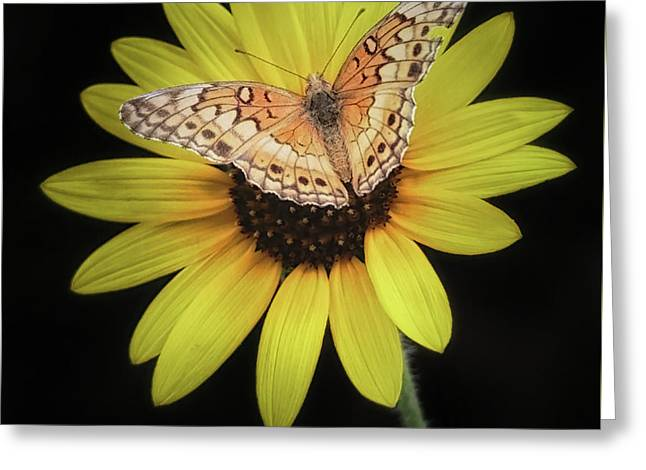 Perfect Timing Greeting Card by Elaine Malott