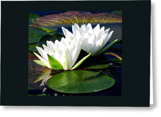 Greeting Card featuring the photograph Perfection Together by Angela Davies