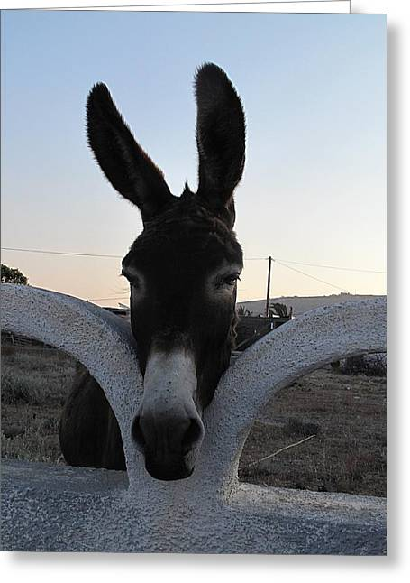 Perissa Donkey Greeting Card by Martine Murphy