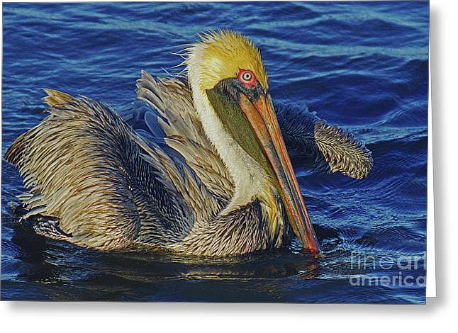 Perky Pelican II Greeting Card