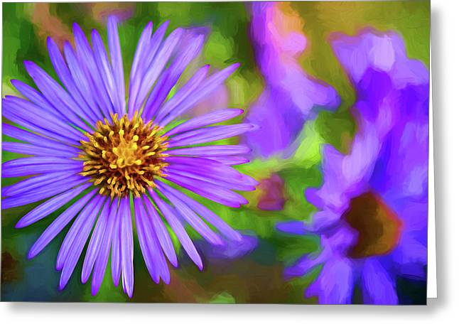 Perky Purple Aster - Paint Greeting Card by Steve Harrington