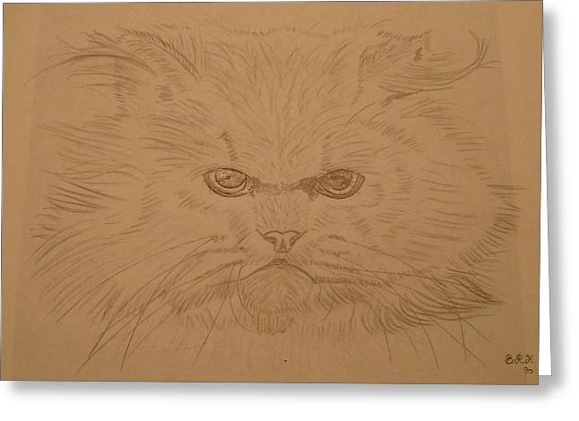 Persian Cat 4 Greeting Card by Bo Klinge