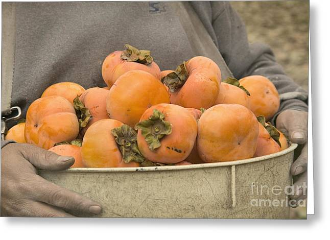 Persimmons In A Bucket Greeting Card by Inga Spence