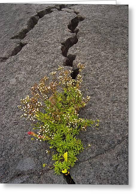 Persistent Flora Greeting Card by Robert Ponzoni