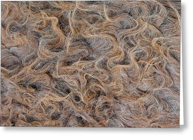 Greeting Card featuring the photograph Peruvian Burro Curls by Britt Runyon
