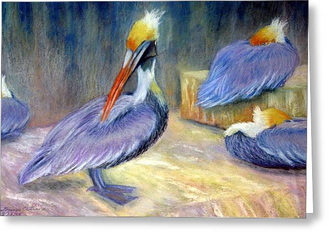 Peruvian Pelicans One  Pastel Greeting Card