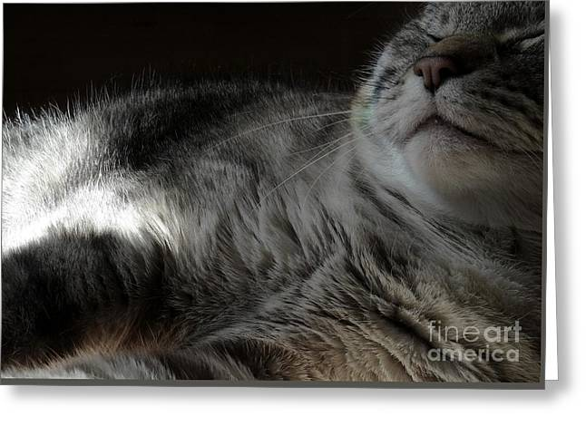 Pet Portrait - Lily Three Greeting Card