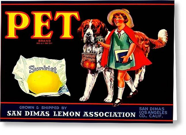 Pet Saint Bernard 1920s California Sunkist Lemons Greeting Card by Peter Gumaer Ogden