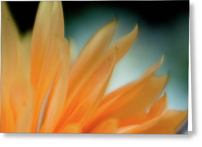 Greeting Card featuring the photograph Petal Disaray by Greg Nyquist